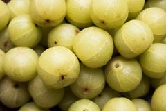 Indiański agrest lub owoc Amla lub avla, selekcyjna ostrość Obrazy Stock