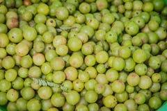 Indiański agrest także znać jako emblic, emblic naboda, naboda, Indiański agrest, Malacca drzewo lub am, (Phyllanthus emblica) Obrazy Stock