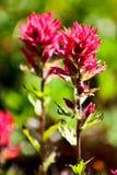 Indiański farby muśnięcia kwiat Zdjęcia Stock
