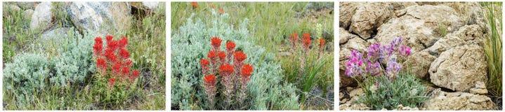 Indiański farby muśnięcia kwiatu kolaż Zdjęcie Royalty Free