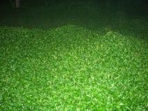 Indiański greenery przy nocą Fotografia Royalty Free