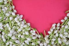 Indiański Jaśminowy kwiat obraz royalty free