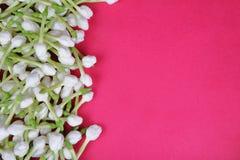 Indiański Jaśminowy kwiat zdjęcie stock