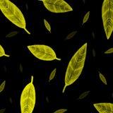 Indiański kolorów żółtych liści wzór na czerni Fotografia Royalty Free