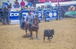 Indiański krajowy finału rodeo Fotografia Royalty Free