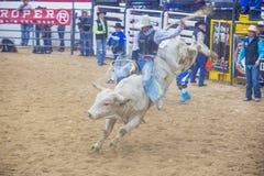 Indiański krajowy finału rodeo Fotografia Stock