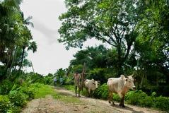 Indiański rolnik zdjęcie royalty free