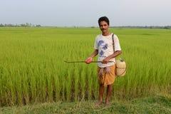 Indiański rolnik fotografia royalty free