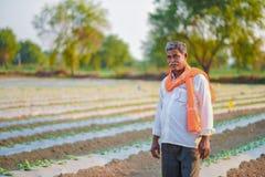 Indiański rolnik sprawdza jego arbuza pole fotografia royalty free