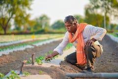 Indiański rolnik sprawdza jego arbuza pole obraz royalty free