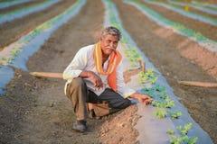 Indiański rolnik sprawdza jego arbuza pole zdjęcia royalty free