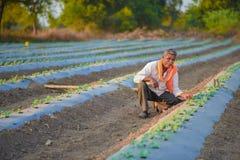 Indiański rolnik sprawdza jego arbuza pole obrazy royalty free