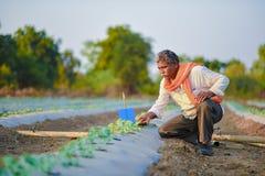 Indiański rolnik sprawdza jego arbuza pole fotografia stock