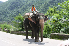 Indiański słoń Obraz Royalty Free