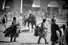 Indiańskie krów chłopiec Zdjęcie Royalty Free