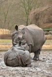 Indiańskiej nosorożec matka i dziecko w pięknej natury przyglądającym siedlisku Obrazy Stock