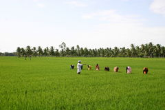 India agriculture stock photo