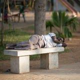 本地治里市, INDIA-FEBRUARY 12 :印度睡觉在街道上  免版税库存照片