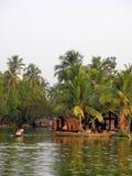 India Floresta tropical da palmeira em destinos das marés do KE Imagens de Stock