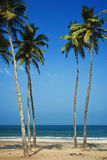 India - Goa - Agonda beach Royalty Free Stock Images