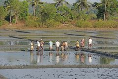 India, GOA, 03 February 2018. Indian workers plow the field with shovels and are reflected in the water. Heavy manual labor in stock photography