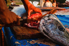India Goa Fish. Cut head nife hands coocking Stock Photo
