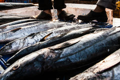 India Goa Fish Stock Photos