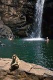 India -Goa - Monkey Stock Photo
