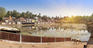 India. Goa. A sacred reservoir in the village and a cow Royalty Free Stock Images