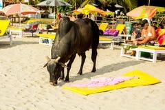 India, Goa, Vagator beach Stock Photos