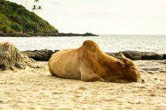 India, Goa, Vagator beach Royalty Free Stock Image
