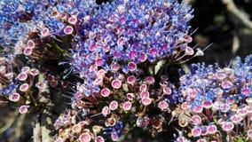 India Gokarna naturalny tło kwiat Obraz Stock