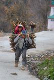 Sherpas carry large bundles of firewood on their backs. India, Himalayas - March 16, 2018 Sherpas carry large bundles of firewood on their backs stock image