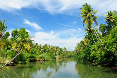 India - Kerala canal. Coco trees reflection at back waters of Kerala, India Stock Image