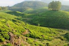 India, Kerala Royalty Free Stock Image