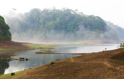 India Kumily, Kerala, India - National park Periyar Wildlife San Royalty Free Stock Photos