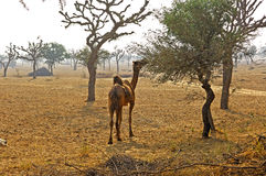 India, Mandawa: typical landscape Stock Photos