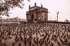 India Mumbai. I took this picture of a famous monument in India - Gateway of India in Mumbai . The early morning birds getting there feed at the famous place royalty free stock photo