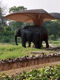 In india new delhi zoo eliphant