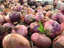 India ondiep met spruit in de stapel van supermarkt Royalty-vrije Stock Foto