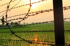 India Pakistan Border. Fields at the India Pakistan Border Royalty Free Stock Image