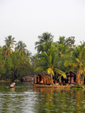 India.Palm tree tropical forest in backwaters destinations of Ke Stock Images