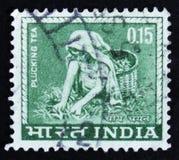 India postage stamp shows Tea picking worker, circa 1965 Royalty Free Stock Photo