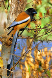 India, Ranthambore: vogel Royalty-vrije Stock Foto