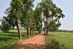 India rural Foto de Stock Royalty Free