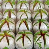 Indiańscy cukierki Fotografia Stock