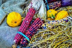 Indiańska dekoracyjna kukurudza na rolnym pokazie Zdjęcie Royalty Free
