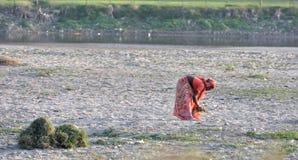 Indiańska kobieta Podnosi Up trawy Obraz Royalty Free