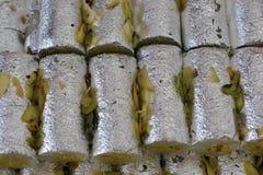 Indiański cukierki barfi Obrazy Royalty Free