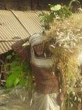 Indiański rolnik Zdjęcia Royalty Free